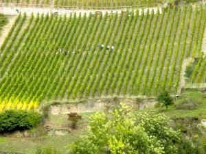 cruising past a winery