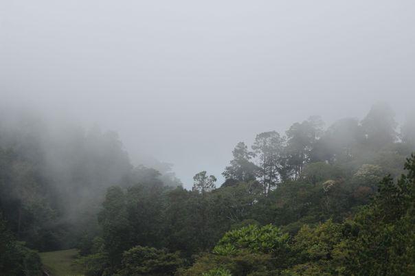 Misty forest in Zomba, Malawi